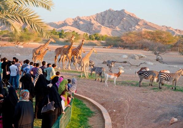 Al-Ain-Zoo