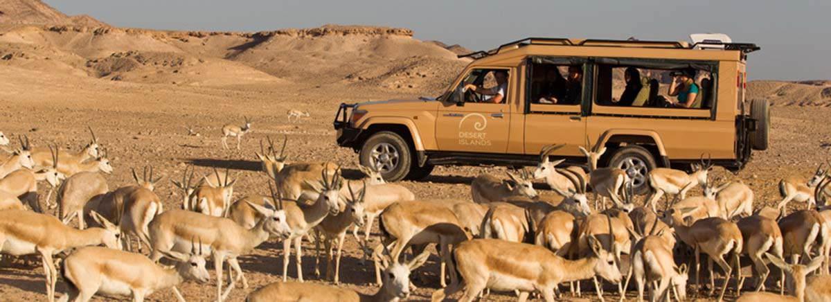Ikea Schrank Für Spülmaschine ~ Desert Islands Anantara Abu Dhabi Wildlife encounters